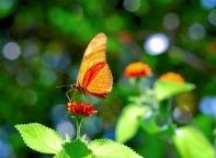 Butterfly (c) 2008 James Glennon