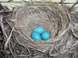 Jim's Nest