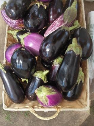 Eggplant Galore