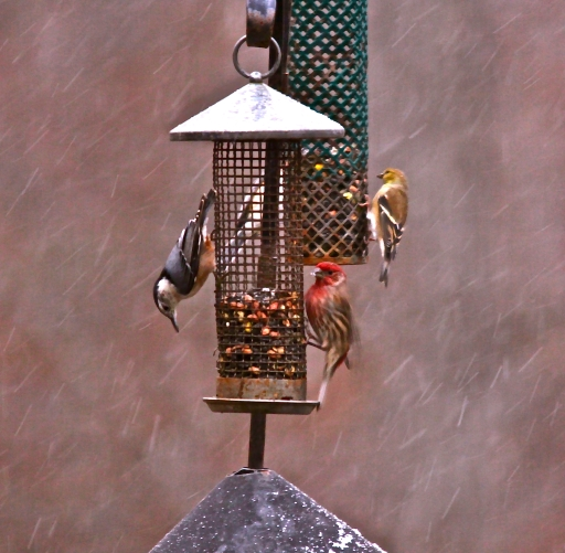 THREE BIRDS AT A BIRD FEEDER