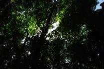 Back-Lit Forest