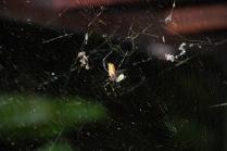 Web-Caught Light