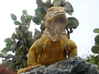 iguanagold2