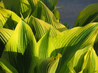 Sun shines down on leaves/A variegated green/ Like watercolors