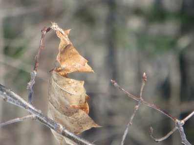 Is it a bird? Is it a plane? . . . . It's Bat-Leaf!