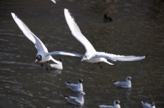 jimlondonbirds