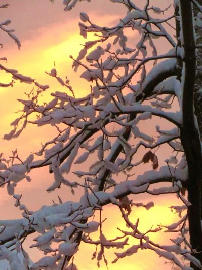 snow 005