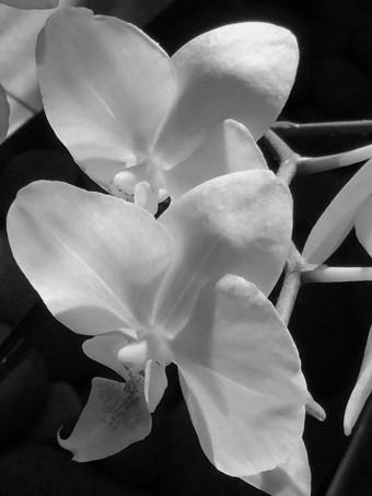 orchids (2)