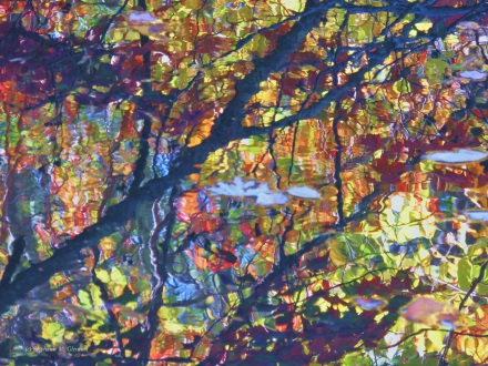 autumn 086