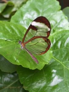 butterflies3 012