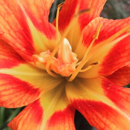 flowers 487