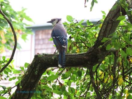 PPbirds 023
