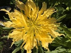 flowers 148