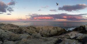 seagullover