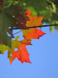 autumn 052