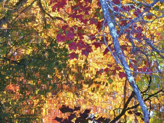 autumn 078