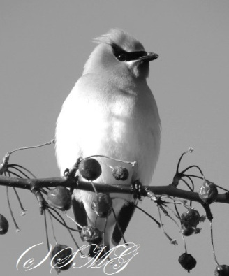 banditbird